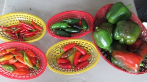 Clockwise from top left: red chili peppers, green jalapenos, sweet bell peppers, red mature jalapenos, habenero peppers