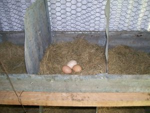 Brown eggs | Square Peg Food Farm