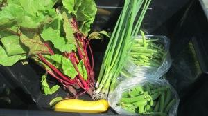 CSA Week 5 | Square Peg Food Farm