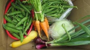 CSA Week 6 | Square Peg Food Farm